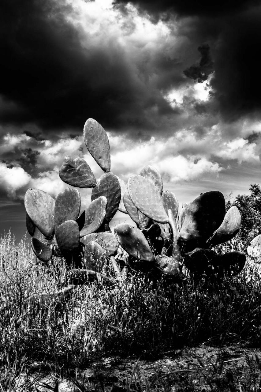 Un fico d'india con le nuvole da temporale. Azzate San Giuvanni è la preghiera per scongiurare un temporale.