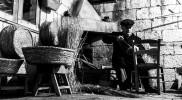 Antichi mestieri in un Salento senza tempo: i cesti in paglia