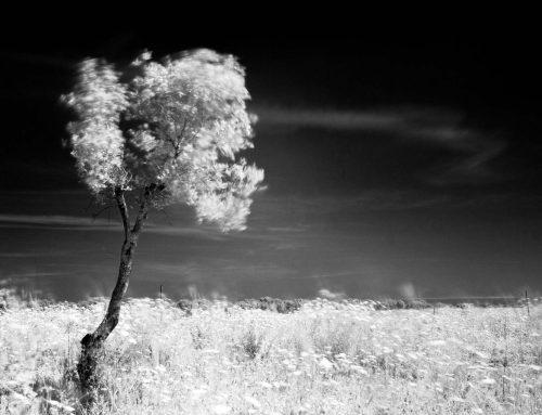Il canto del vento